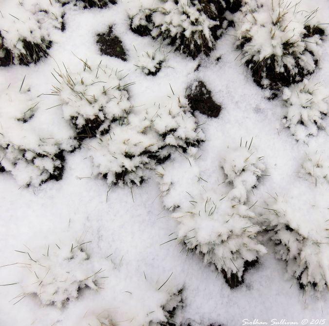 Snow4 11-24-2015
