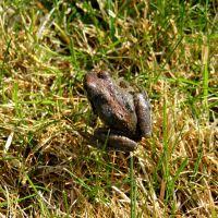 Frog1 5-2016