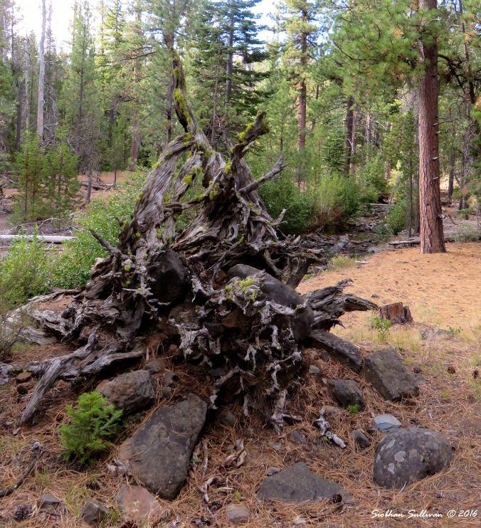 Roots&Rocks 2Sept2015