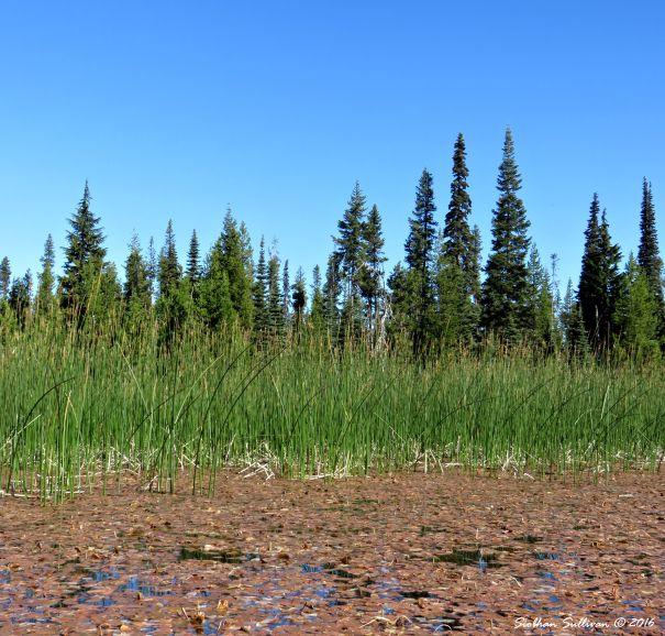Habitats of Hosmer Lake, Oregon