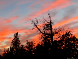 Juniper Sunset 20Sept2016