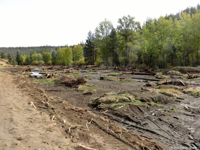 Whychus Creek restoration 6October