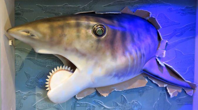 Buzzsaw Shark at HDM September2016