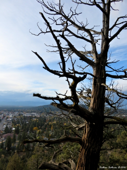 Juniper tree and views to the East October 2016