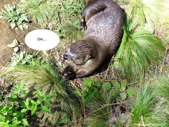 Om Otter 27Sept2016