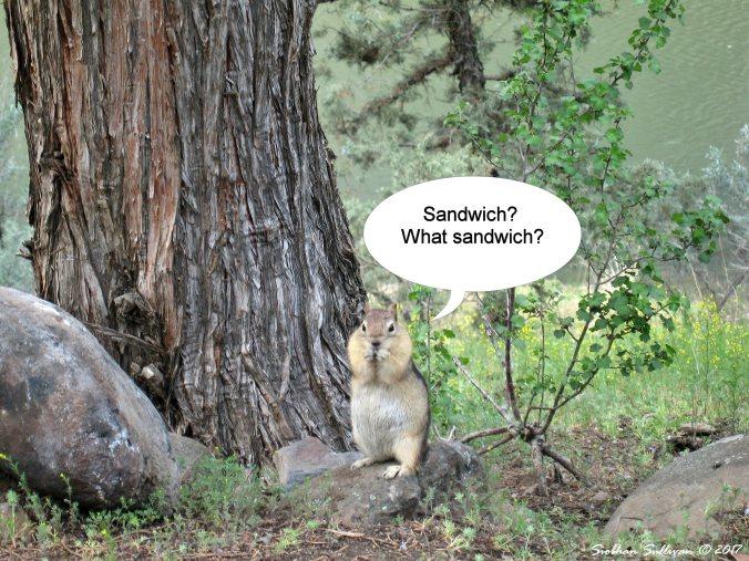 Ground squirrel 9April2015